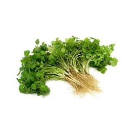 Coriander (Dhania)Approx  - 100gm-120gm