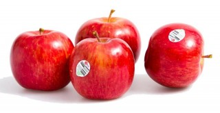 New Zealand Gala Apple (510gm-600gm)
