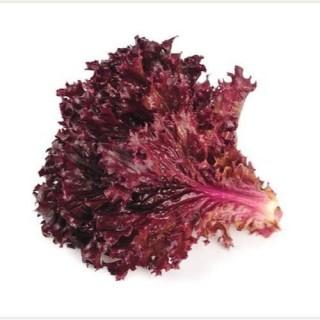 Red lettuce (Lal salad patta) 150gm-200gm
