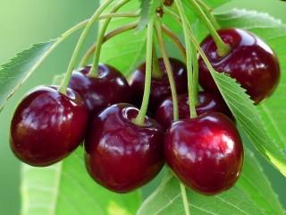 Kanda Cherry (400-450gm)